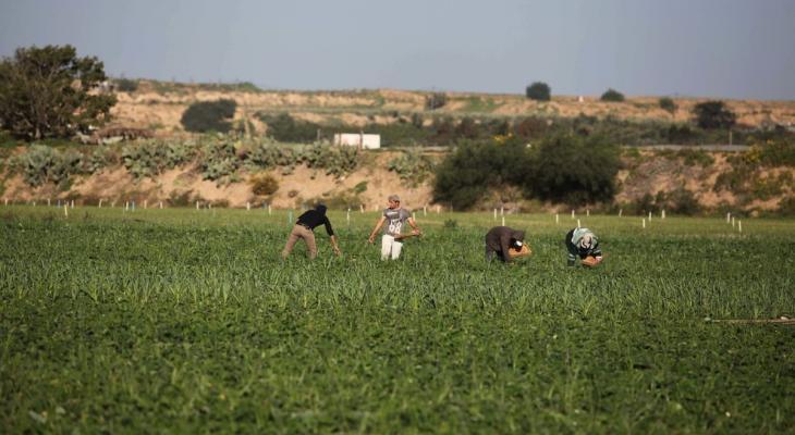 توغل إسرائيلي محدود شمال القطاع وإطلاق نار جنوبه